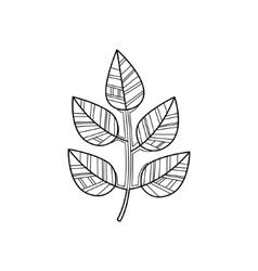 Branch Zentangle For Coloring vector image