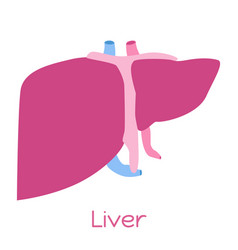liver in flat style viscera icon internal organs vector image