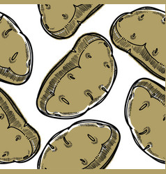 potato vegetable grown in ground used in culinary vector image