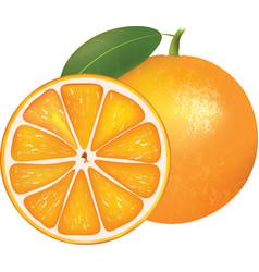 Whole orange and half vector