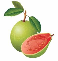 guava vector image vector image