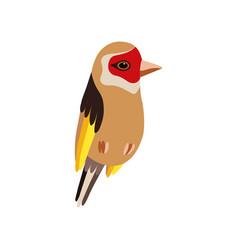 little goldfinch bird cute birdie home pet vector image