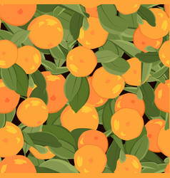 orange mandarin tangerine with green leaves on vector image