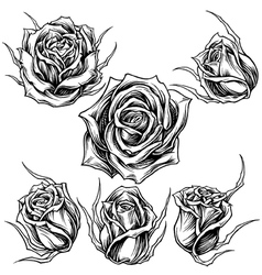 Roses set vector