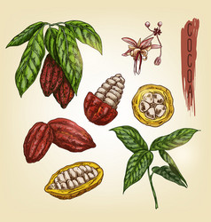 sketch of cocoa elements colourful vector image