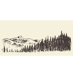 Hand drawn landscape fir forest and meadow sketch vector image