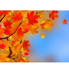 Background made of autumn leaves EPS 8 vector image