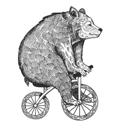 bear on bicycle engraving style vector image vector image
