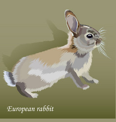Cute realistic little european rabbit vector