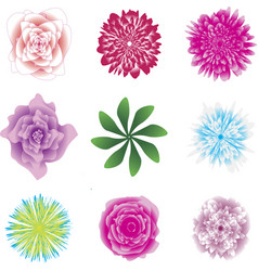 flower set beautiful coloured flowers and leaves vector image