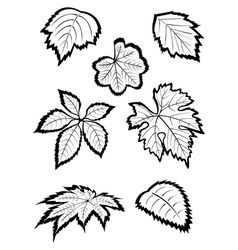 hand-drawn leaves vector image