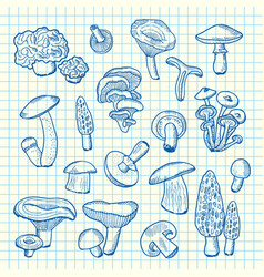 hand drawn mushrooms on cell sheet vector image