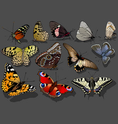 Set brightly colorful butterflies vector