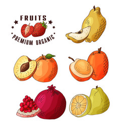colorful food design with vector image vector image