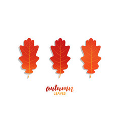 autumn oak leaves set fall autumn leaves vector image