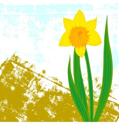 Card with one single daffodil vector