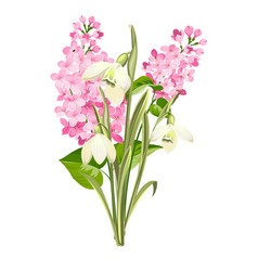purple lilac flowers of syringa and white vector image
