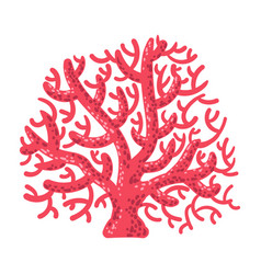 Red fan coral tropical reef marine invertebrate vector