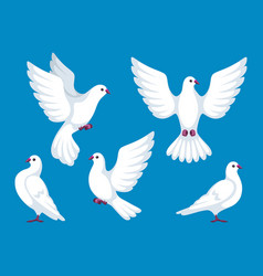 set of five white doves beautiful pigeons faith vector image
