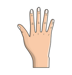 nice hand with all fingers and nails vector image