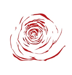 Abstract sketch red rose effect a watercolor vector