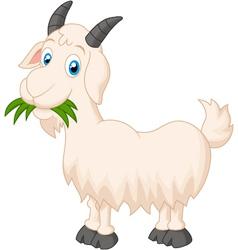 Cartoon goat eating grass vector image