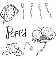 Flower details buds stems and poppies contour vector