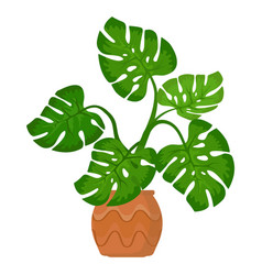 Monstera plant in pot on white background vector