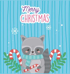 cute raccoon with candy canes leaves merry vector image
