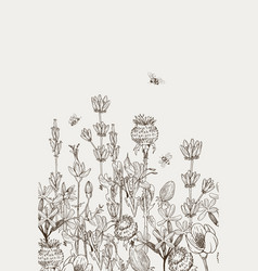 herbal and wild plants seamless border vintage vector image