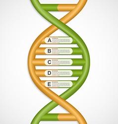 Infographics in dna helix form design element vector