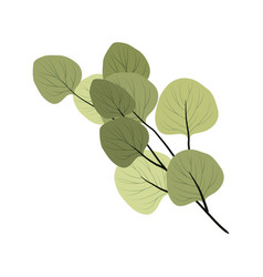 isolated branch a tropical plant on a white vector image