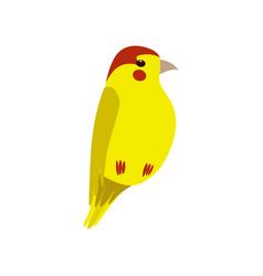 little yellow bird cute birdie home pet vector image