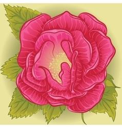 Rose flower pink vector image