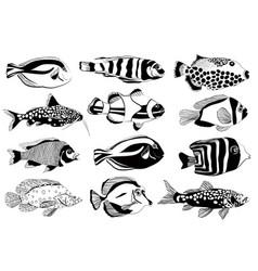set aquarium fish black and white design vector image