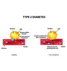 The absorption of glucose by the cell Type 2 vector