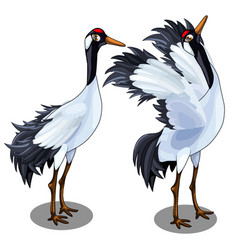 two images japanese crane bird isolated vector image