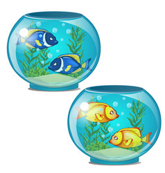 two aquariums with tropical fish and seaweed vector image