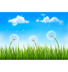 Nature background with dandelions vector image
