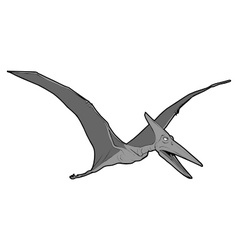 pteranodon vector image vector image