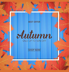 autumn card sale banner with maple leaves frame vector image