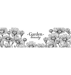 daisy flower banner drawing hand drawn vector image