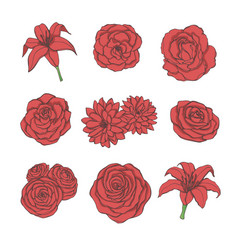 Hand drawn set of red rose lily peony flowers vector