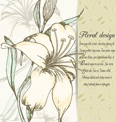 Lily design card vector