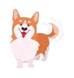 Short-legged welsh corgi with brown coat in vector