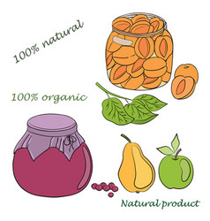 conservation fruits vector image