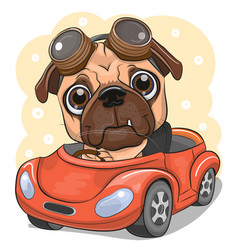 Cartoon pug dog boy in glasses goes on a red car vector
