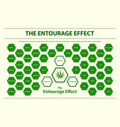 Entourage effect overview horizontal vector