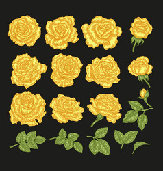 yellow roses hand drawn flowers and vector image