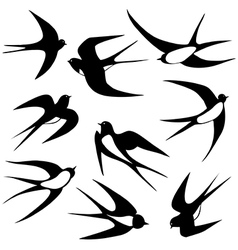 Bird swallow set poses vector image vector image